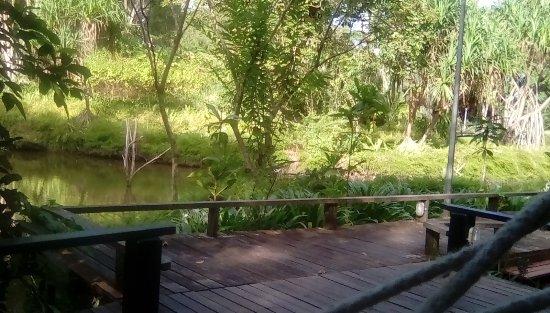 Sepilok, Malasia: View from the hammock.