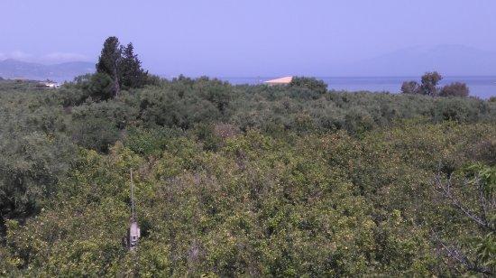 Meso Gerakari, Greece: cytrynowy sad