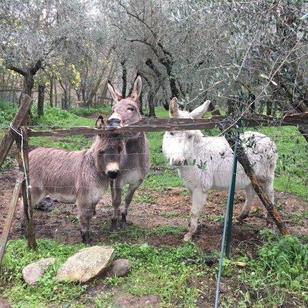 Agriturismo Al Palazzaccio: photo3.jpg