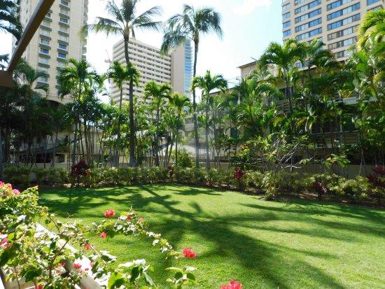 プール横の芝生 - Picture of Wyndham Royal Garden at Waikiki ...