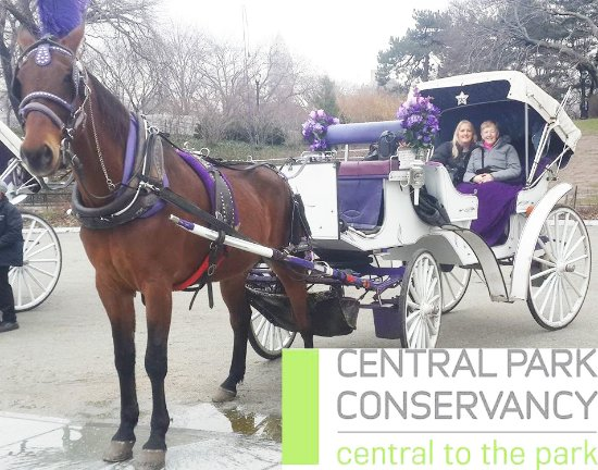 ‪Official Central Park Horse and Carriage Rides‬