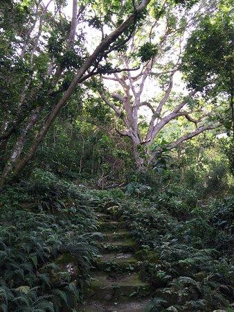 Mount Scenery: Begin van de tocht
