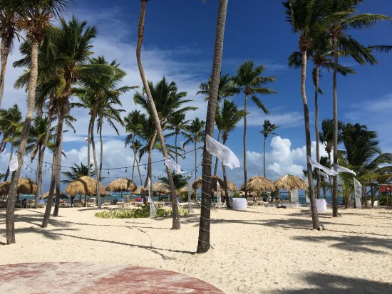 Paradise Palm Trees Picture Of Catalonia Bavaro Beach
