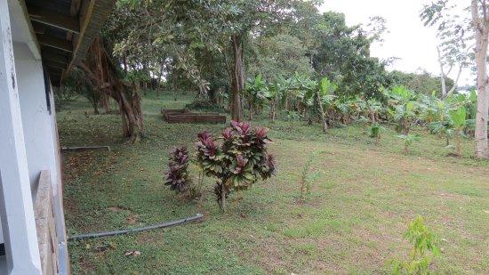 Mancarron, Nicaragua: Vanuit het balkonnetje zicht op een deel van de tuin