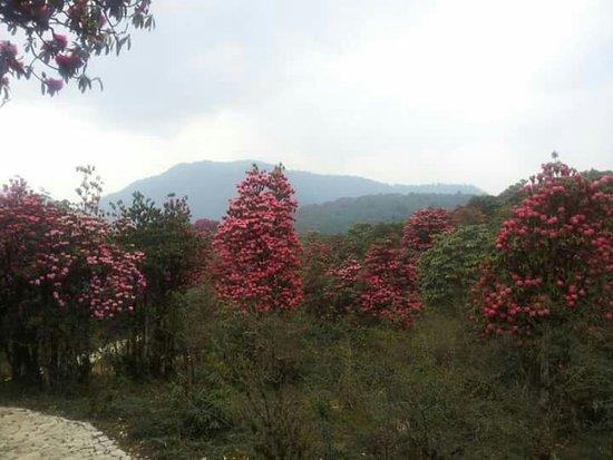 West Sikkim照片