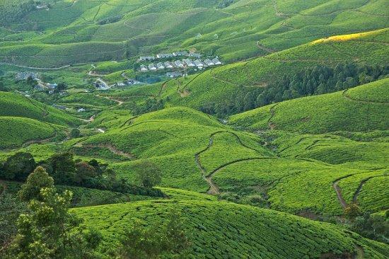 Kottagudi, India: Harrison malayalam tea estate