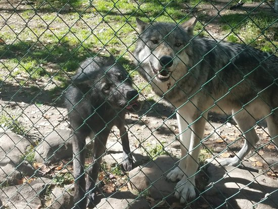 Columbia, Nueva Jersey: Two members of the pack