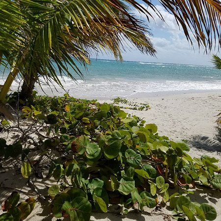 Almaplena Eco Resort & Beach Club : 20180131_125707_large.jpg