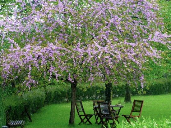 Detalle jard n picture of el jardin de carrejo hotel cabezon de la sal tripadvisor - Jardin de carrejo ...