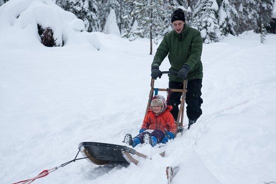 Bigfork, MT: father and son dog sledding