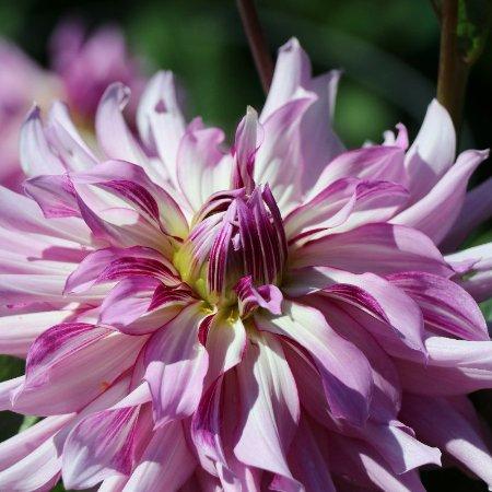 Mendocino Coast Botanical Gardens: Flower Gardens
