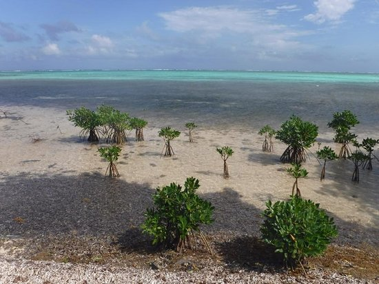 Spirit Of The West Cayman Islands