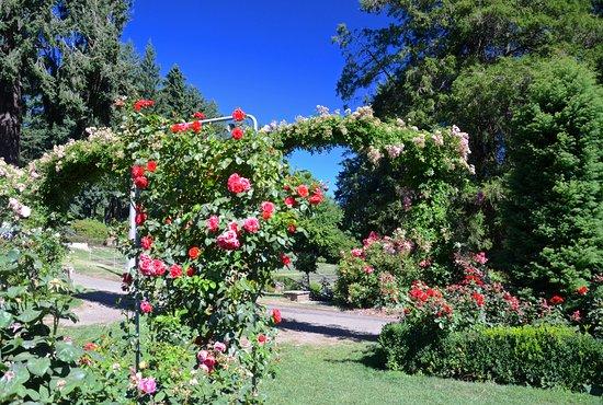 International rose test garden portland all you need - International rose test garden portland ...