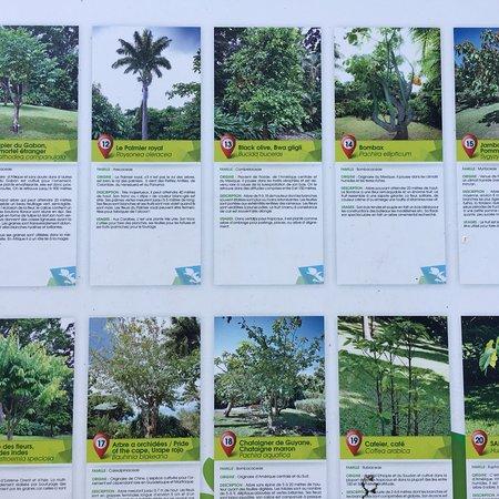 Boutique picture of jardin botanique de deshaies for Boutique jardin botanique