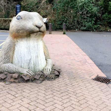Belfast Zoo: photo9.jpg