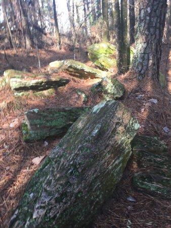 Миссисипи: Mississippi Petrified Forest