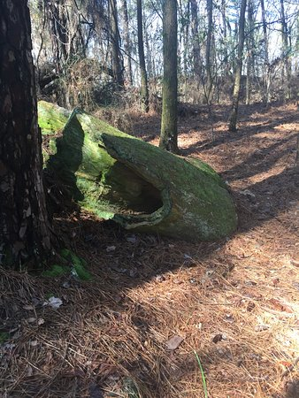 Mississippi: Lichen On The Petrified Logs