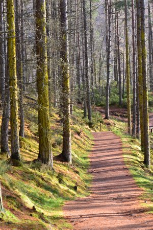 Contin, UK: Forest