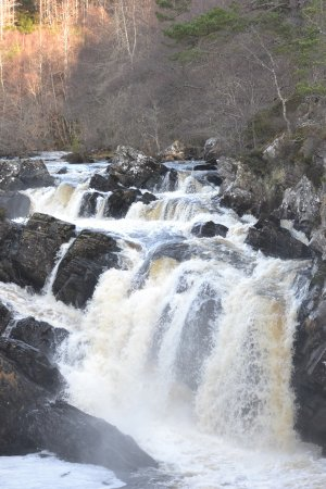 Rogie Falls : Waterfall