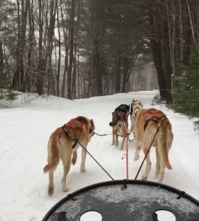 Oxford, ME: Our sled dogs