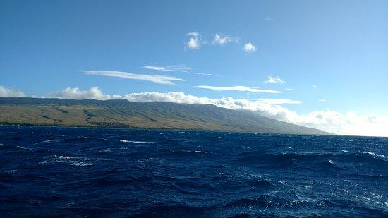 Molokai fish dive center molokai fish dive for Molokai fish and dive
