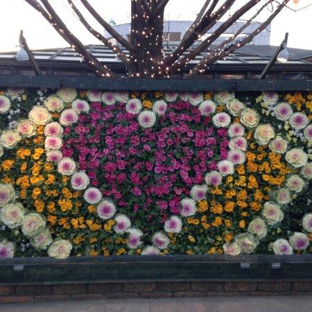Ashikaga Flower Park : photo2.jpg