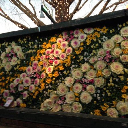 Ashikaga Flower Park : photo3.jpg