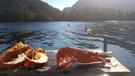 Fiordland Expeditions - Day Tours: Kayaking before dinner!
