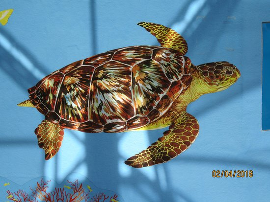 Juno Beach, FL: Turtle graphic on tank