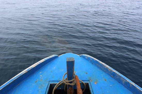 Bunaken Island, إندونيسيا: IMG_7549_large.jpg