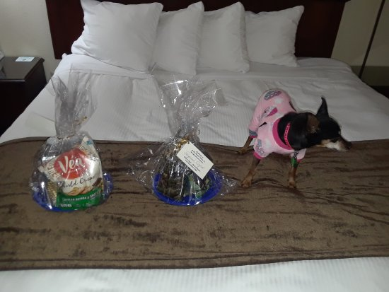 Wheatland, WY: People and pets get gift packages!