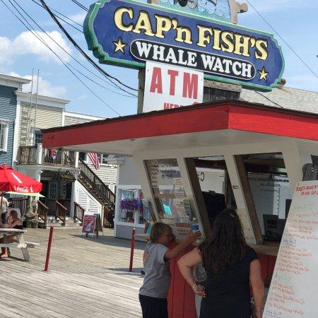 Cap'n Fish's Whale Watch: photo0.jpg