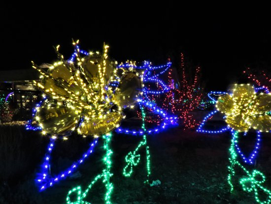 Lights at the gardens on spring creek