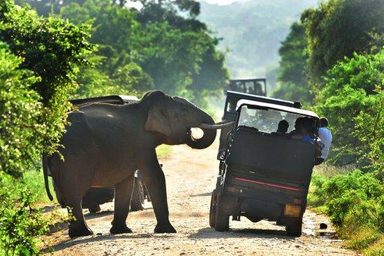 Bentota, Sri Lanka: Yala