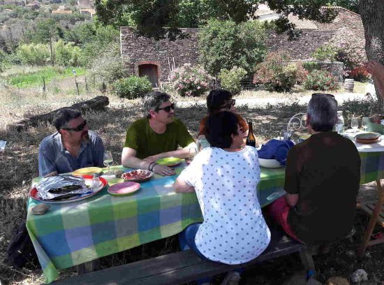 Sant Sadurni d'Anoia, Spain: Lunch between vineyards.