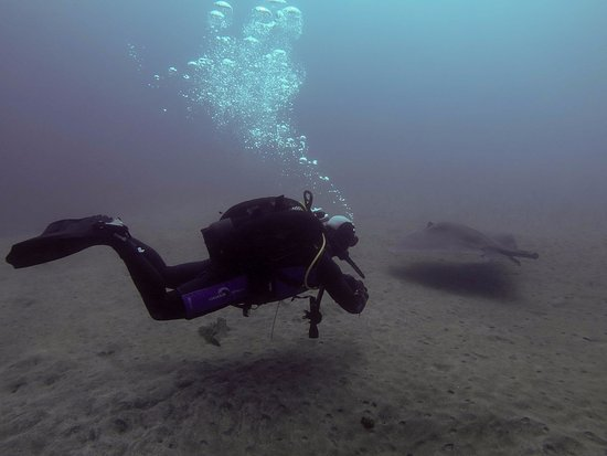 Golf del Sur, Spanyol: Diving with rays