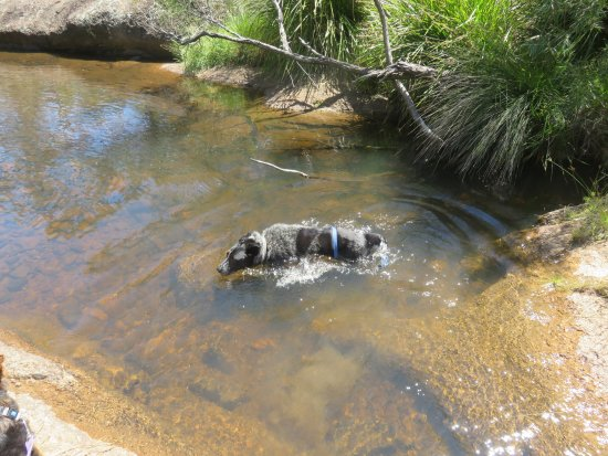 Megalong Valley Tearooms: Going for a swim