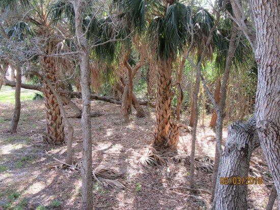 Jensen Beach, Flórida: Palm trees