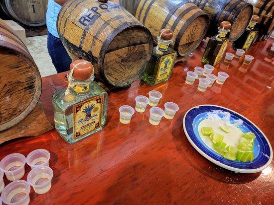 MexiGo Tours: Tequila tasting - Go Flamingo tour