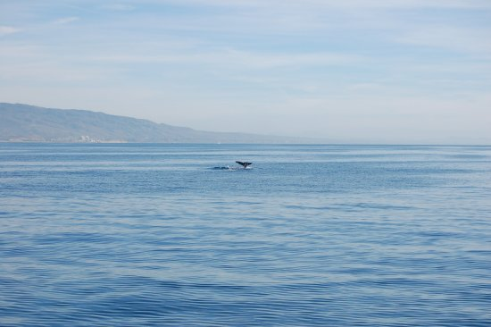 Dana Point, Kaliforniya: Grey Whales