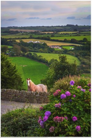 Ballinhassig, Irlanda: Billy the horse; Shot from driveway of Ardfield Farmhouse