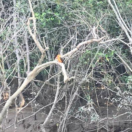 Bhitar Kanika National Park: photo6.jpg