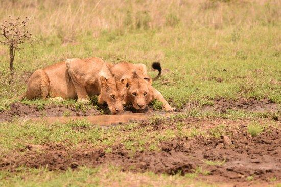 Bundu Tours & Safaris