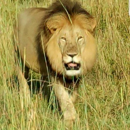 Welgevonden Game Reserve, جنوب أفريقيا: photo6.jpg
