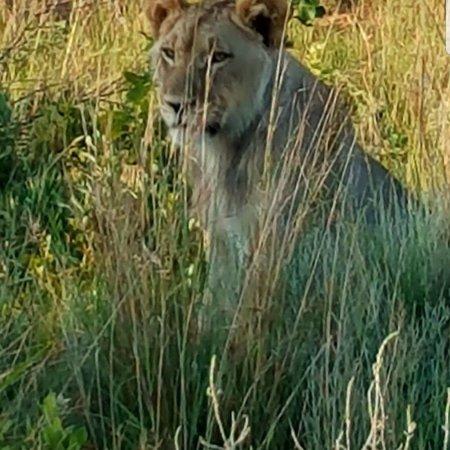Welgevonden Game Reserve, جنوب أفريقيا: photo7.jpg