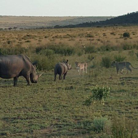 Welgevonden Game Reserve, جنوب أفريقيا: photo8.jpg