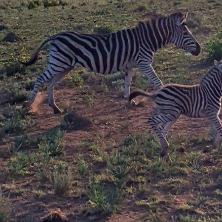 Welgevonden Game Reserve, جنوب أفريقيا: photo9.jpg