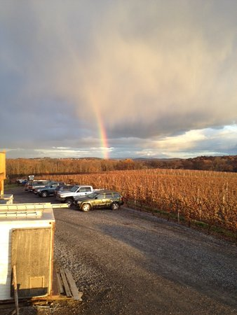 Middleburg, PA: Rainbow in the vineyard