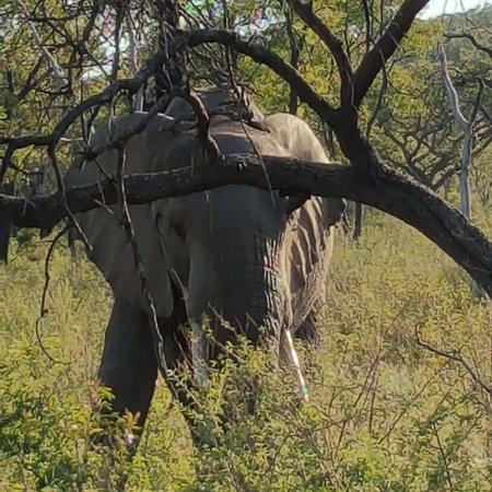 Welgevonden Game Reserve, South Africa: Mhondoro Game Lodge