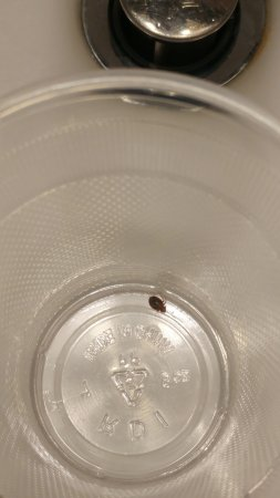 Red Lion Inn & Suites Long Island City: Bed bug that crawled on our sheets